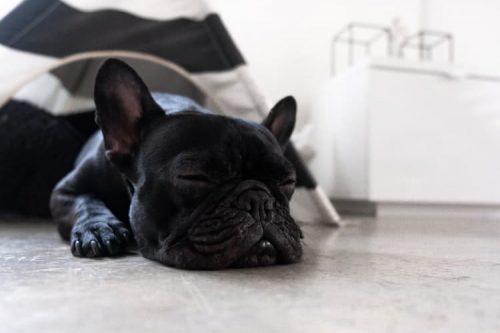 puppy sleeping on concrete floor